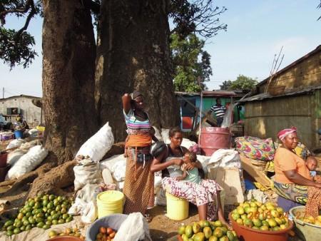 マンゴの大木とマンゴ売りのおばさんたち